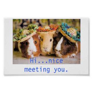 Guinea Pig Acquaintances Poster