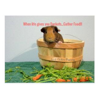 Guinea pig advice Card