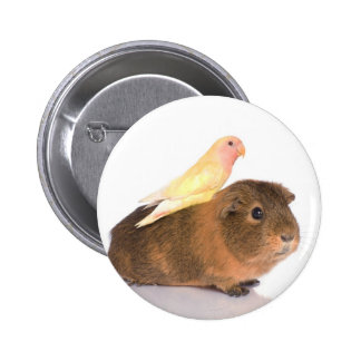 guinea pig and yellow bird 2 inch round button