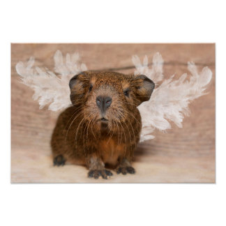 Guinea Pig Angel Poster