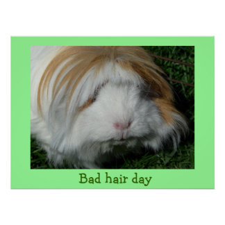 guinea pig, Bad hair day Poster