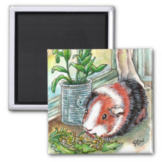 Guinea Pig by the Window Magnet