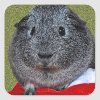 Guinea Pig Christmas Square Sticker