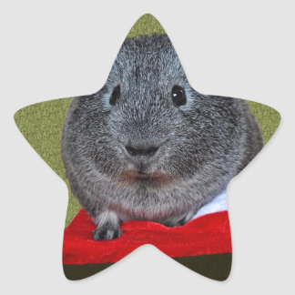 Guinea Pig Christmas Star Sticker