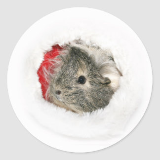 Guinea Pig Christmas sticker