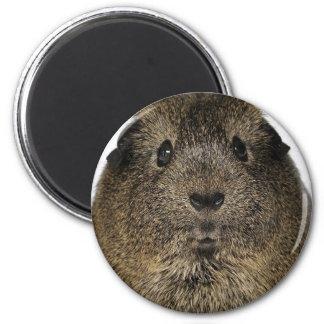 Guinea Pig Close Up Magnet