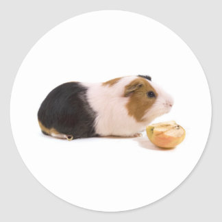 guinea pig eating year APPLE Classic Round Sticker