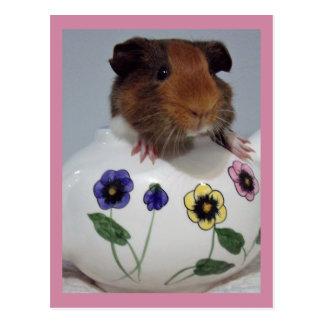 guinea pig in tea pot card postcard
