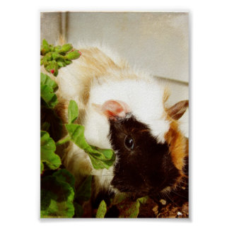 Guinea Pig in the Flowers Poster