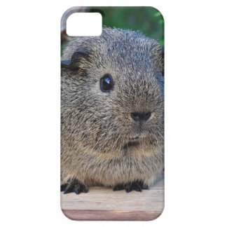 Guinea Pig iPhone 5 Case
