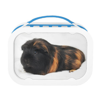 Guinea Pig Lunch Box