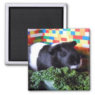 Guinea Pig Magnet