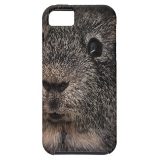 Guinea Pig Music Pet iPhone 5 Covers