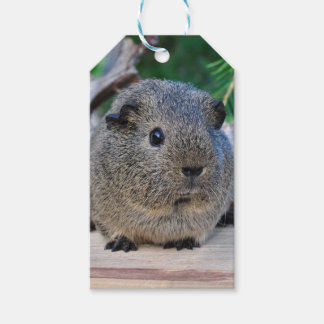 Guinea Pig Pack Of Gift Tags
