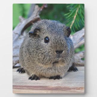 Guinea Pig Plaque
