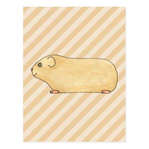 Guinea Pig. Postcards