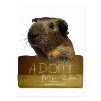 Guinea Pig Rescue Adoption Postcard