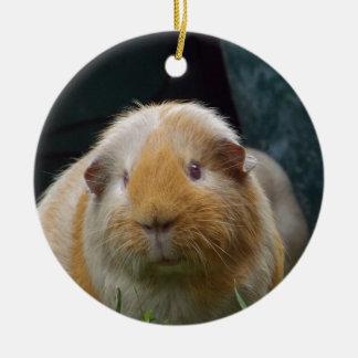 Guinea pig round ceramic ornament