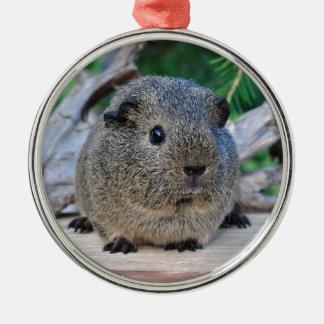 Guinea Pig Silver-Colored Round Ornament
