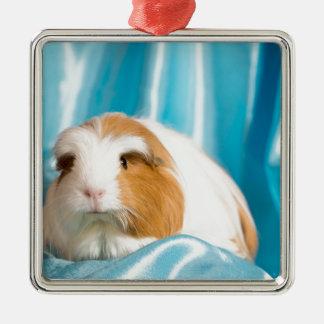 guinea pig Silver-Colored square ornament