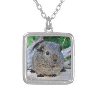 Guinea Pig Silver Plated Necklace