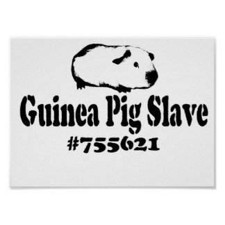 Guinea Pig Slave Poster