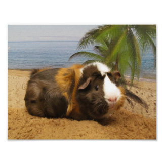 Guinea Pig  Under Palm Tree Poster