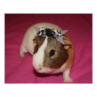 Guinea Pig With Bow 2 Poster