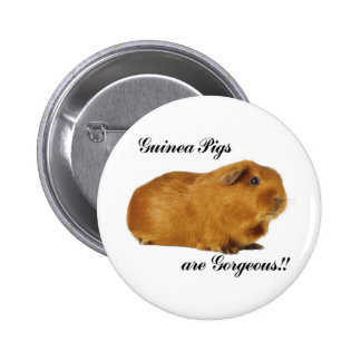 Guinea Pigs are gorgeous 2 Inch Round Button