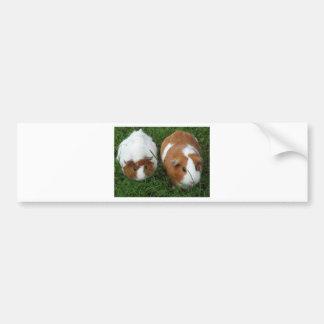 Guinea Pigs Bumper Sticker