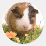 guinea pigs on a lawn adhésifs ronds