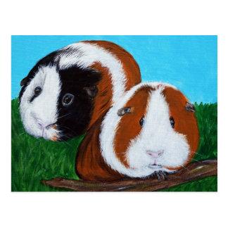 Guinea Pigs Postcard