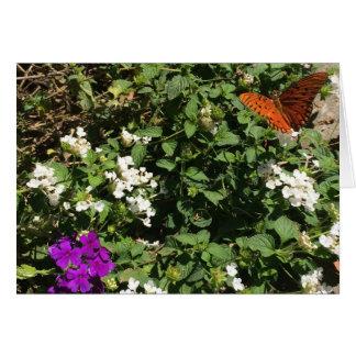 Gulf Fritillary butterfly, card