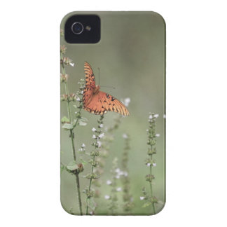 Gulf Fritillary Butterfly iPhone 4 Cover