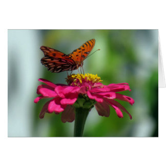 Gulf Fritillary Butterfly on a Zinnia Card