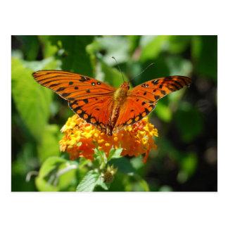 Gulf Fritillary Butterfly Postcard