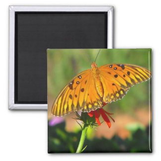 Gulf Fritillary Butterfly Upclose Square Magnet