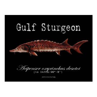 Gulf Sturgeon-Black-Postcard Postcard