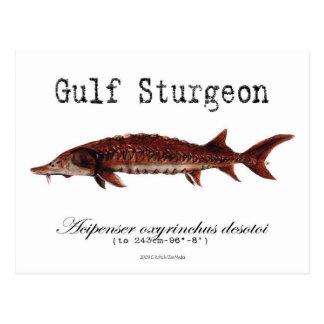 Gulf-White-Postcard Postcard