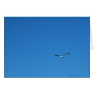 Gull Card