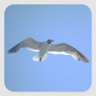 Gull in Flight Square Sticker