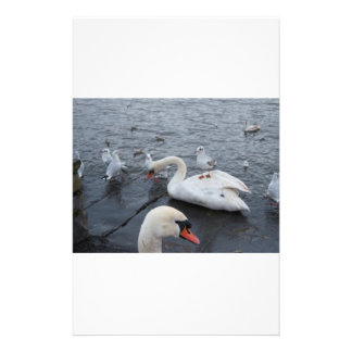 Gull on a Swans back Stationery