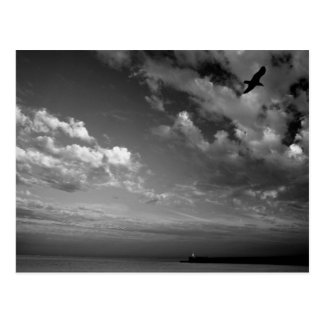Gull over the Lighthouse. Postcard