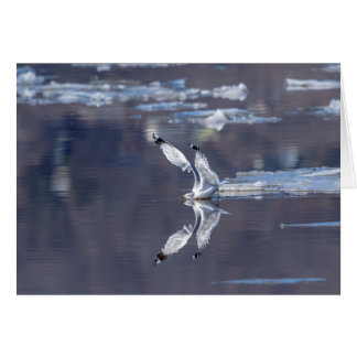 Gull Reflections Card
