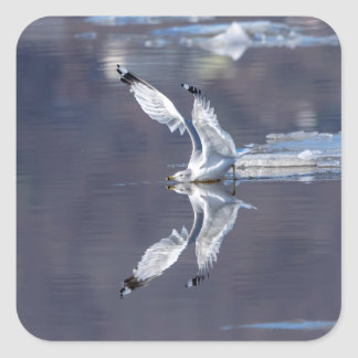 Gull Reflections Square Sticker