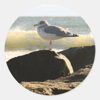 Gull Stickers