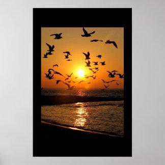 Gull sunset print