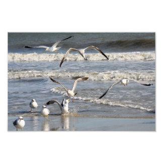 Gull time at the beach photograph