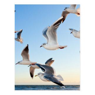 gulls-3 postcard