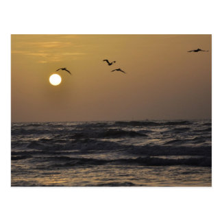Gulls and Sunset on Texas Coast Post Card